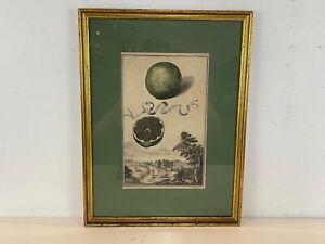 "Antique ""Pomo da Sina"" Framed Engraving After Johann Volkamer Circa 1723"