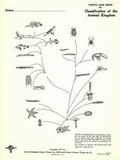 Turtox Quiz Sheets: Classification of the Animal Kingdom, copyright 1947