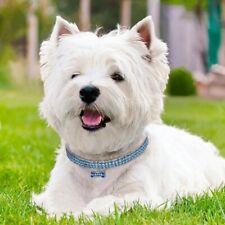 Fancy Cute Look Nylon 3Size Adjustable Cat &Dog Collar Neccklace Pet Accessories