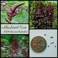 100+ PRINCE'S FEATHER SEEDS (Amaranthus cruentus) Purple Ornamental Edible
