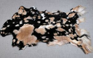 """New Goat hide Rug Hair on Area Rug Size 36""""x20"""" Animal Leather Goat Skin A-8648"""