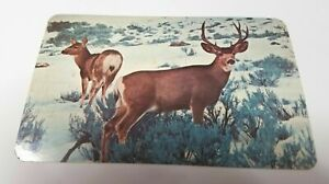 Mule Deer in Winter Snow Sandpoint Idaho Posted Vintage Souvenir Postcard