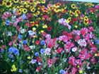 1/16-POUND PERENNIAL 25-VARIEY WILD FLOWER SEED MIXTURE