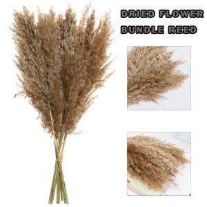 10Pcs/ Natural Dried Pampas Grass Reed Flower Bunch Bouquet Home Wedding Decor