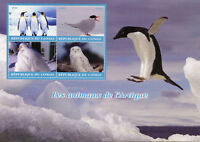 Congo 2018 MNH Arctic Animals Snowy Owl 4v M/S Penguins Terns Owls Birds Stamps