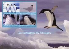 Congo 2018 MNH Arctic Animals Snowy Owl 4v M/S Penguins Terns Owls Birds Stamps
