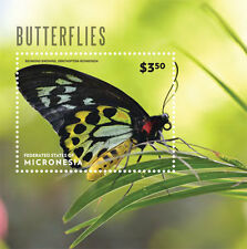 Micronesia-2014-Butterflies
