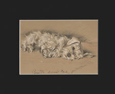 Sealyham Terrier Puppy Dog Cute Print 1940 by Lucy Dawson 8 X 10 - Napping