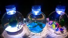 Self sustaining Eco system!Triple tank! Includes shrimps/plants/leds etc!