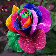5 seed * Rare Beautiful Rainbow Rose seed - Multicolour Rose -  High Quality
