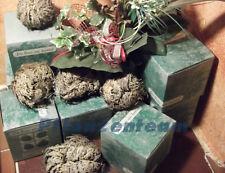 Rose von Jericho Größe XL in der Geschenkbox - 2 Stück