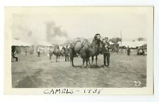 Circus Photography - Camels - Vintage Glossy Snapshot Photograph