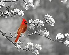 Red Gray Cardinal Art Photo Print Wall Art Cherry Blossoms Home Decor Picture