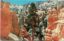 Bryce Canyon National Park - horse trail into canyon - Utah