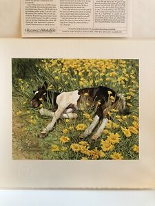 """Bev Doolittle """"SPRING BREAK""""-Pony-Horse-Meadow-ONLY 1,500 Limited Edition Prints"""