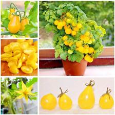100 Pcs Seeds Yellow Gold Pear Tomato Garden Bonsai Juicy Fruit Vegetable New T
