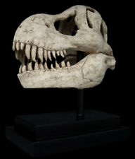 Dinosaur T-Rex Skull Fossil Sculpture Reproduction Replica