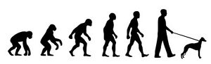Whippet Dog Walker 'Evolution' car sticker, vinyl decal