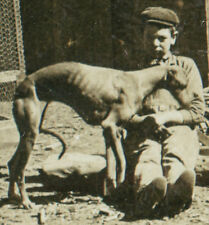 ANTIQUE 1905 CO MOUNTAINEER GREYHOUND DOG ARTISTIC USA DEER STEREOVIEW OLD PHOTO