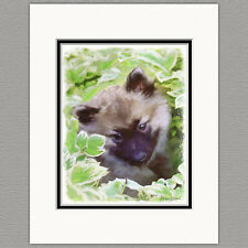 Keeshond Puppy in the Garden Original Art Print 8x10 Matted to 11x14