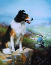 Collie, Sheep Dog on Rock 2 watching sheep by R Atkinson Fox