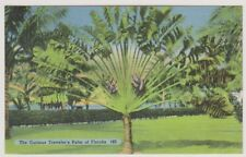 USA postcard - The Curious Traveler's Palm of Florida (A50)