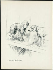 BEDLINGTON TERRIER DOGS AT SHOW LOVELY VINTAGE 1930'S DOG ART PRINT by KF BARKER