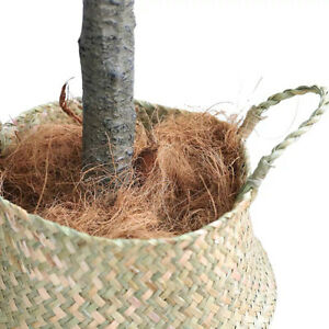 Natural Coconut Husk Fiber Orchids Crafts Insect-proof Protect Plants Coco Base