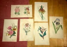 1800's Flower Color LIHOS SET OF 6. Two May be  Watercolors