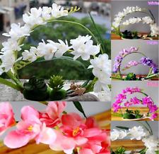 Moth Orchid Seeds Fashion Elegant Phalaenopsis Flower Seeds UK STOCK