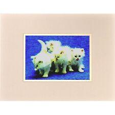 Persian Cats 3D Lenticular Wall Decor Animal Vintage 8x10 #SSP-391-RF-COMO#