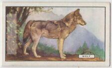 Wolf c80 Y/O Trade Ad Card