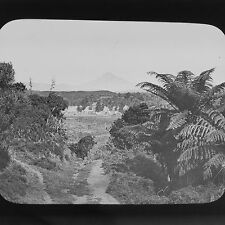 Magic Lantern Slide Vintage C1890 The Bush North New Zealand NZ Social History