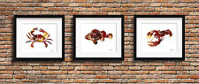 Set of 3 Crab Cod Fish & Lobster Paintings 11 x 14 Kitchen Art Prints by DJR