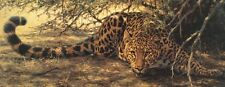 WILDLIFE ART PRINT - Sunspots (detail) by Guy Coheleach 18x36 Leopard Poster