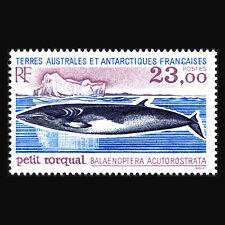 """TAAF 1995 - Antarctic Fauna """"Fish"""" - Sc 208 MNH"""