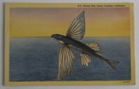Vintage 1930s-40s Linen Postcard Flying Fish/Pacific, Santa Catalina, CA, Unused