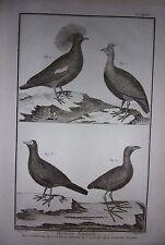 GRAVURE ORIGINALE SUR CUIVRE MARTINET 1768 LA PINTADE FAISAN HOCCO POULE SULTANE