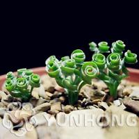 20 pc iris plantas Nature plants Orchid bonsais planta seeds #372