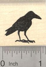 Raven Bird Portrait Rubber Stamp E14501 Unmounted Die