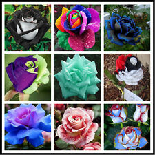 200 PCS Rare Mix Color Rose Seeds Rainbow Bonsai Flower Garden Plants Seed