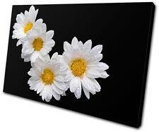 Floral Daisies SINGLE TOILE murale ART Photo Print