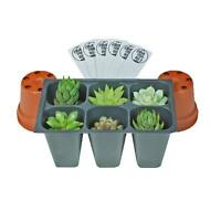 SucCuteLents Assorted 6 Pack - Live Succulent Plants Fully Rooted Plugs in Tray