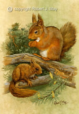 Signed Red Squirrel Print by Robert J. May