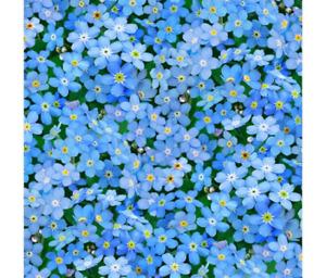 Elizabeth Studios - Forget me not flowers -100% Cotton Patchwork Quilting Fabric