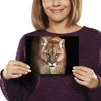 A5 - Adorable Puma Cougar Cat Print 21x14.8cm 280gsm #12655