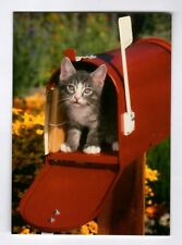 15 Kitten in Mailbox Note Cards Blank Ins Cat Crown Point Graphics All Occasion