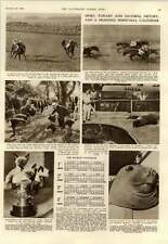 1952 The Only Sea Elephant In Captivity Brazil Coast Seal Pointed Kittens