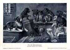 El artista FR. Berner el primer perros-Parlamento histórico son impresiones artísticas 1905