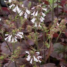 Perennial Flower & Plant Seeds